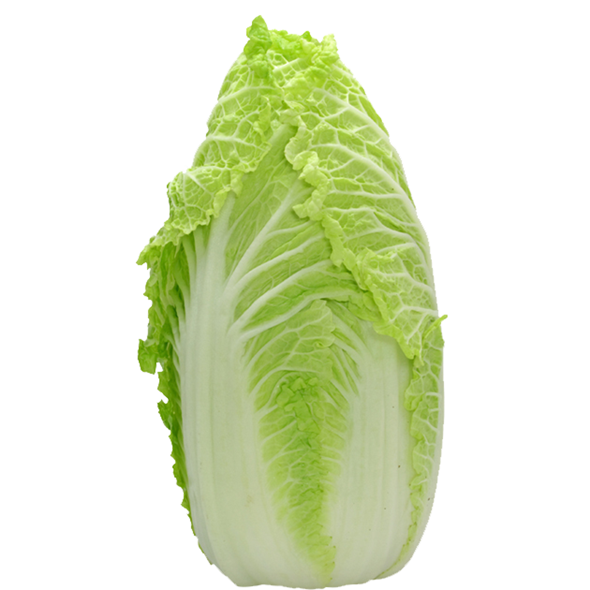 Napa cabbage png. Chinese leaf lettuce vegetable