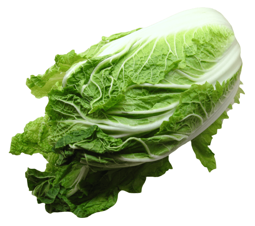 Napa cabbage png. Free images toppng transparent