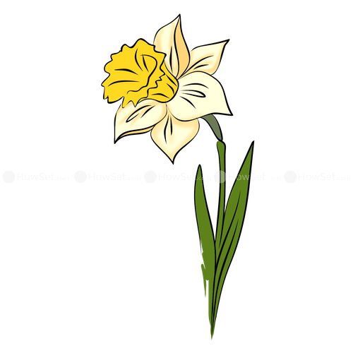 Narcissus drawing three flower. Clipart desktop backgrounds how