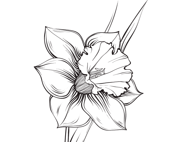 Drawing Orchid Tattoo Transparent Png Clipart Free Download Ya
