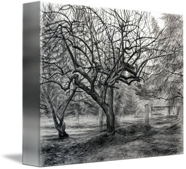 Tree by douglas o. Drawing apple charcoal clipart library library
