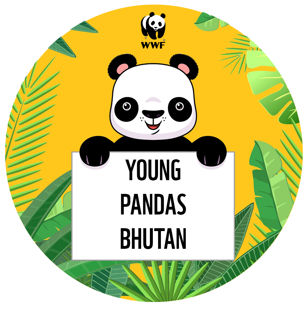 Natural drawing competition. Young pandas bhutan art