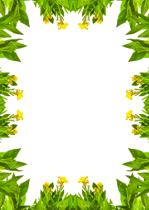 Nature border png. White frame with borders