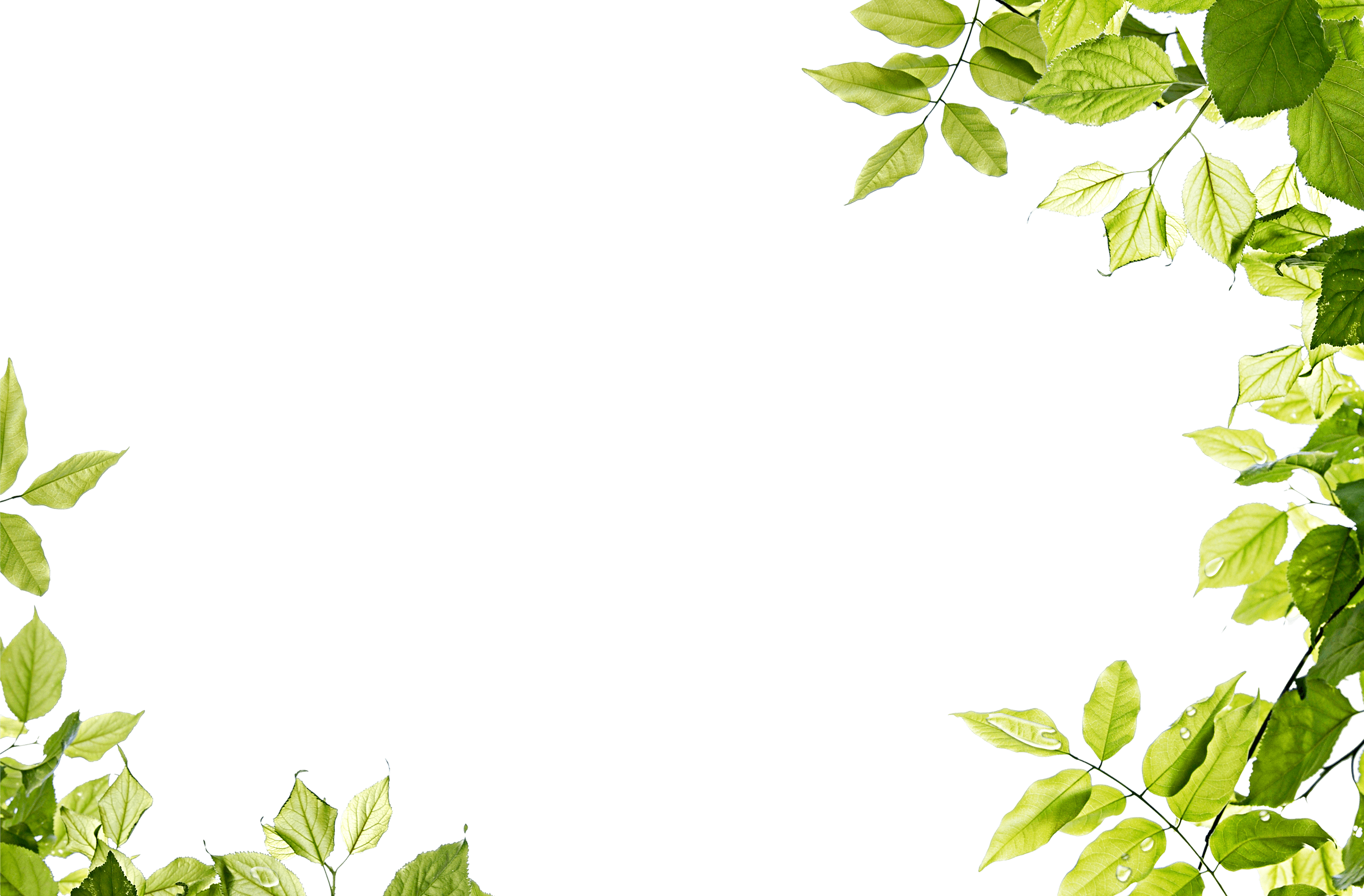 Nature clipart frame. Leaves transparent png stickpng