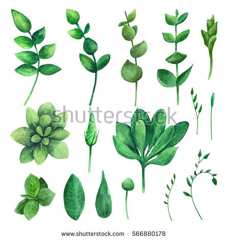 Nature clipart greenery. Watercolor green leaf clip vector transparent stock