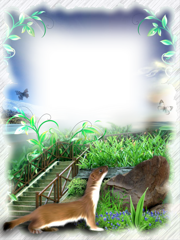 Nature frame png. Transparent photo gallery yopriceville