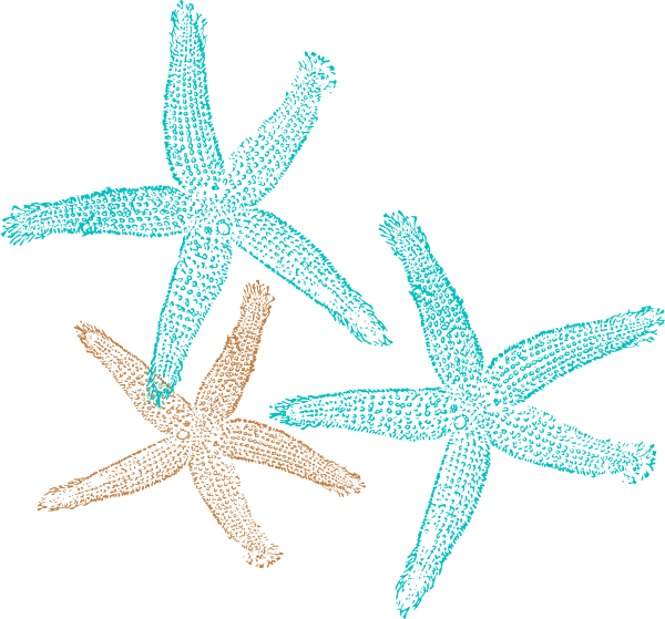 Drawing starfish realistic. Free cliparts download clip