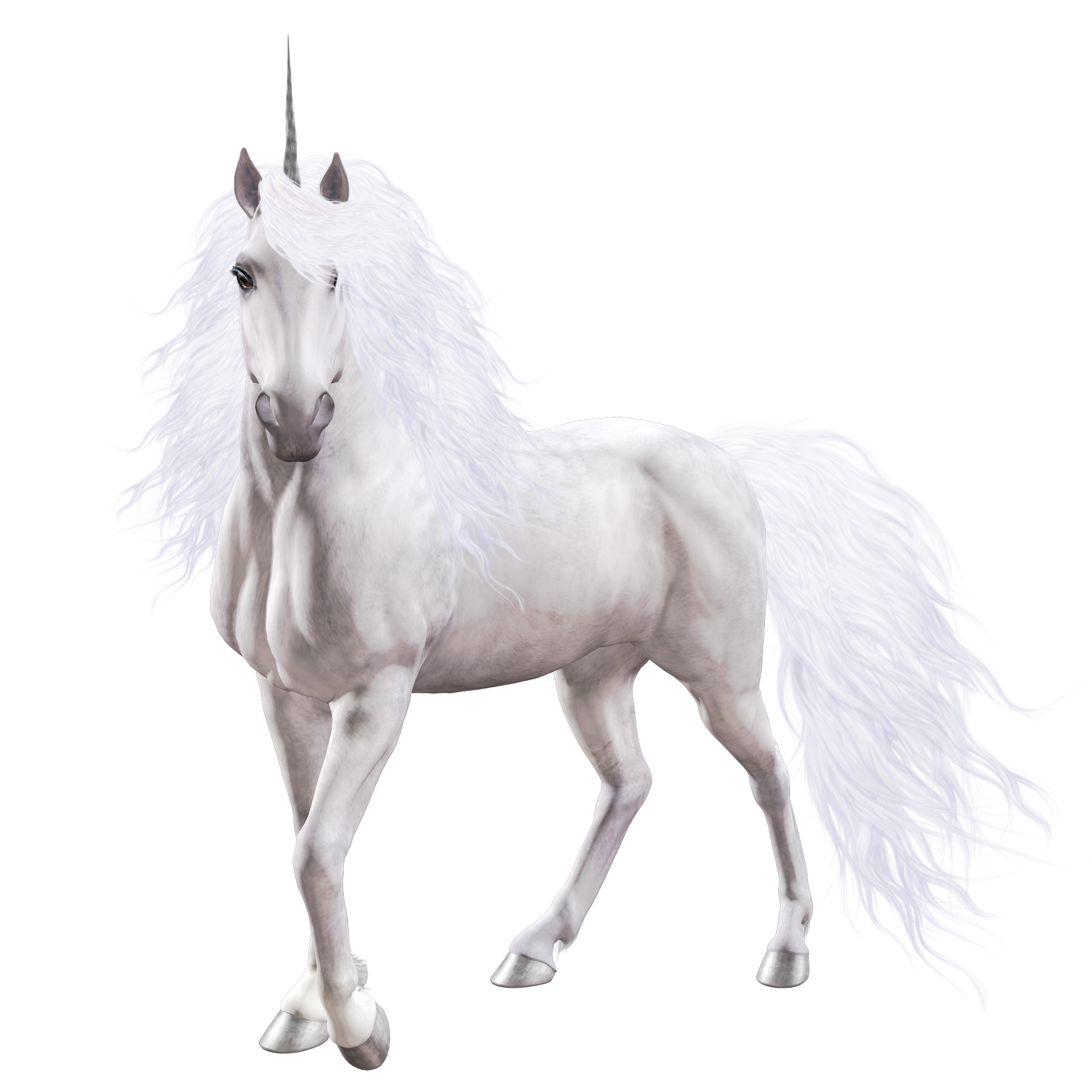 Nicorn png. Unicorn images free download