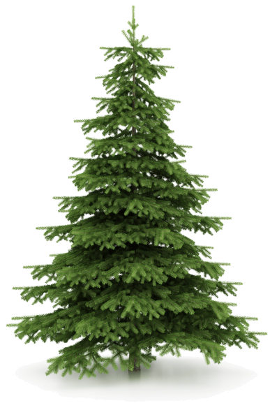 Pine drawing norfolk island. There can be a