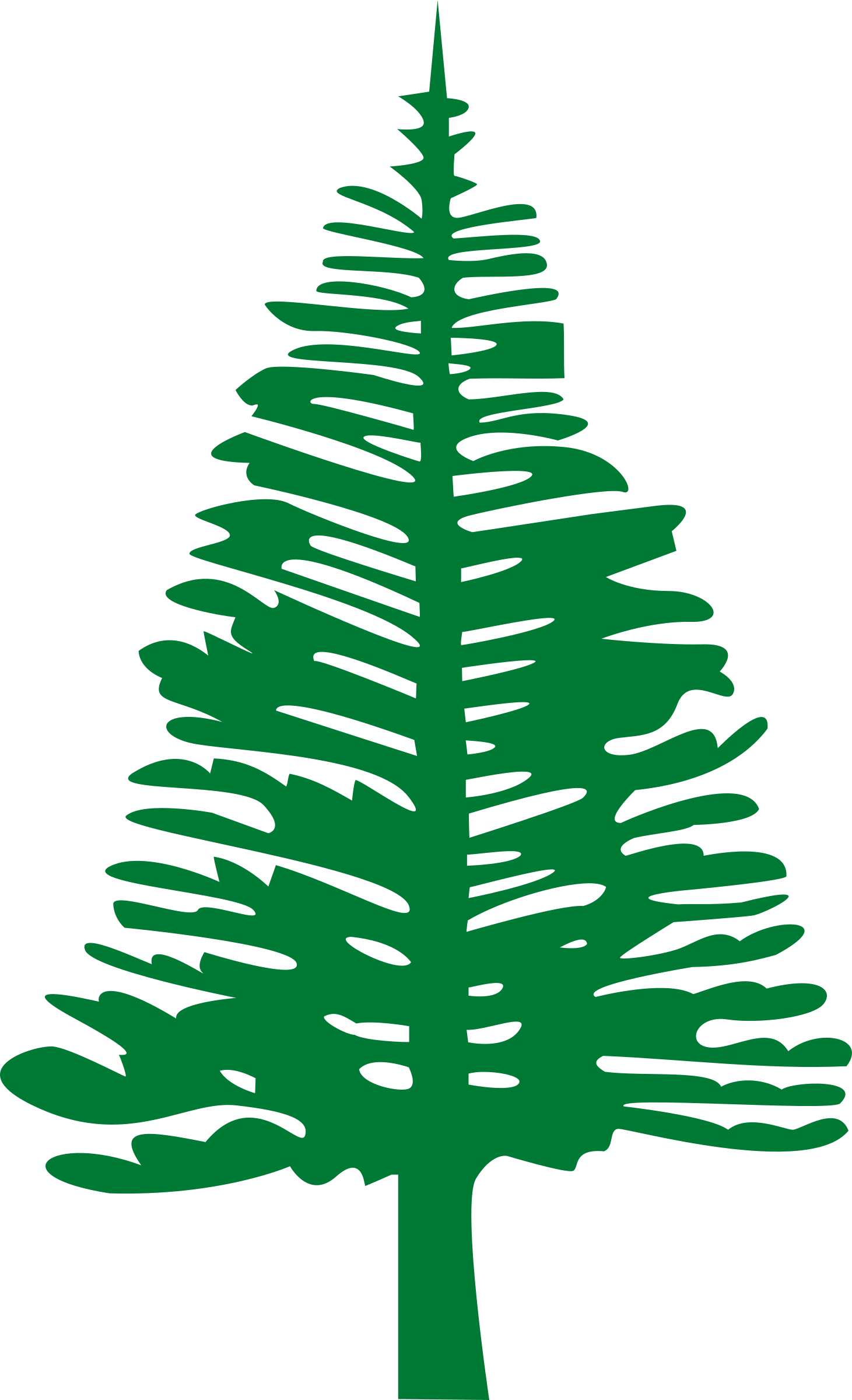 Pine drawing. Norfolk island icons png