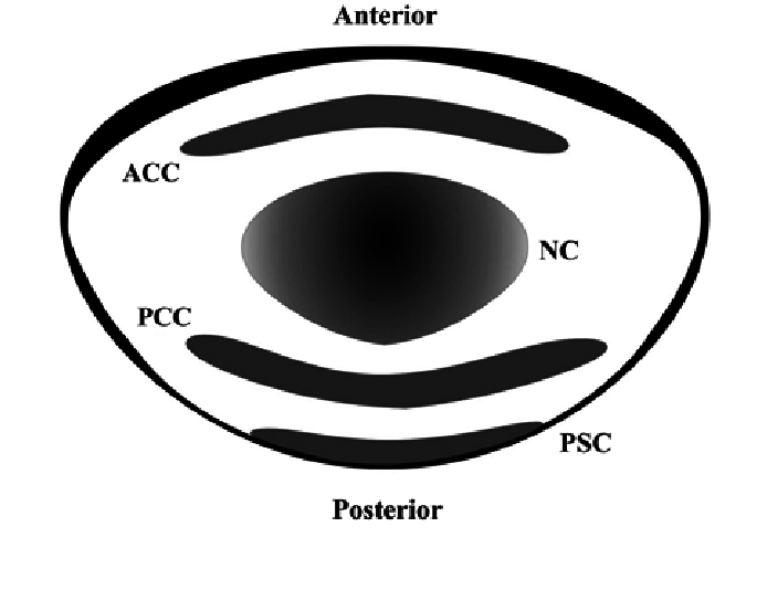 Nuclear drawing creative nature. Schematic of human lens