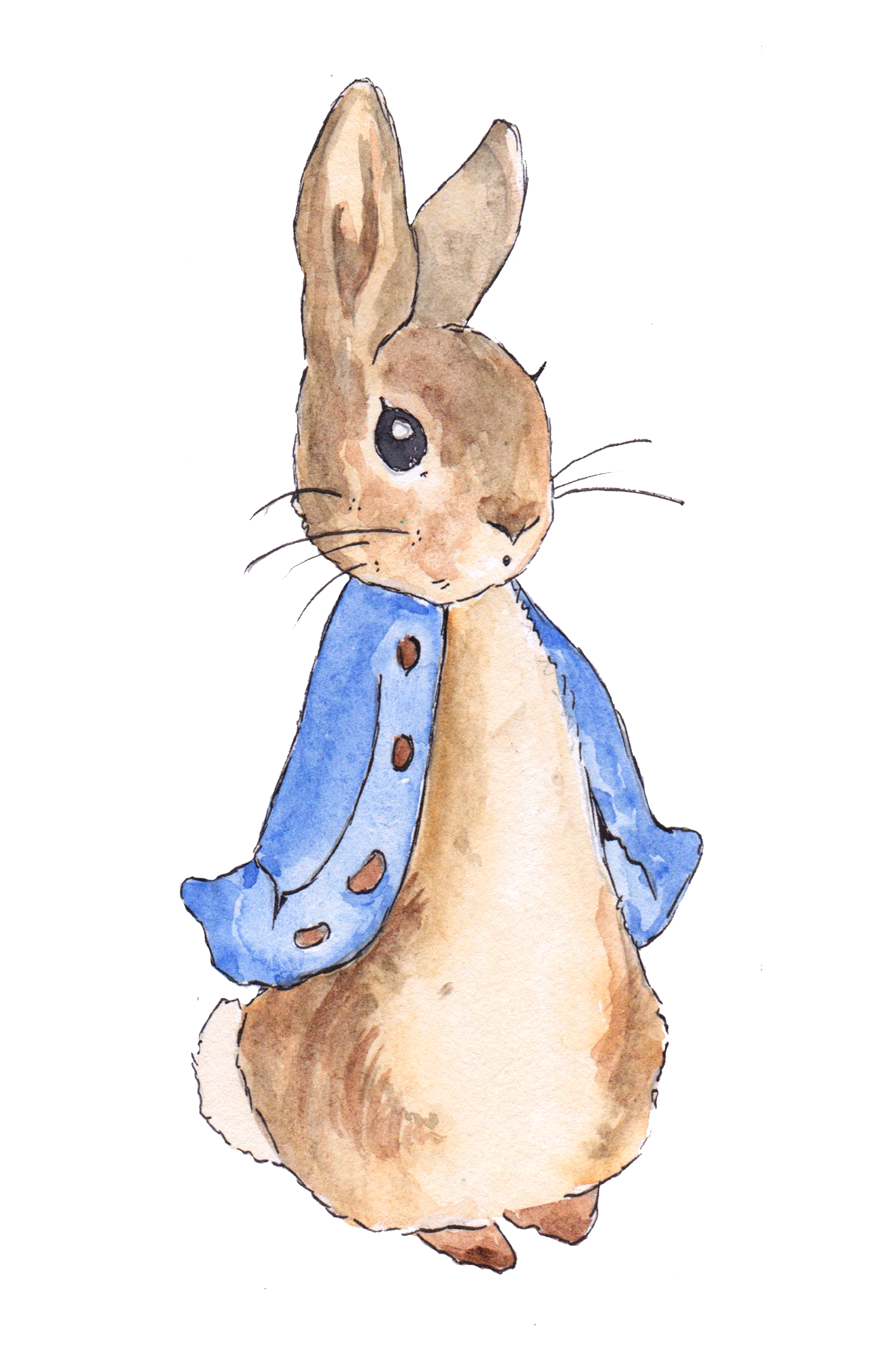 Nursery drawing bunny. The tale of peter