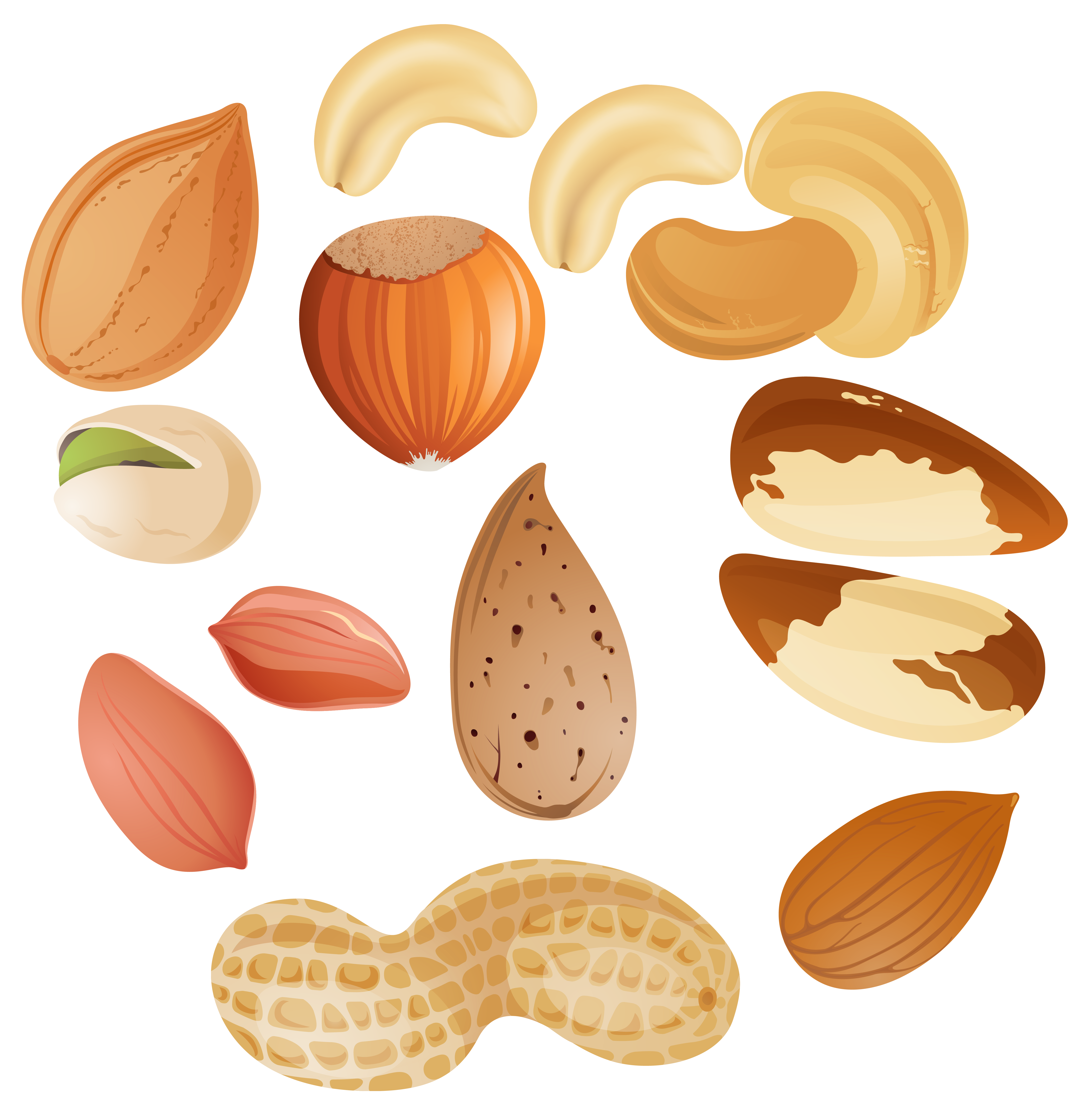 almond vector nut