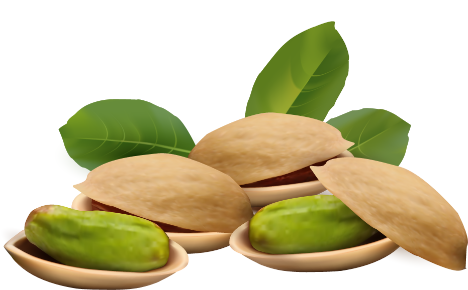 Nuts transparent outline. Pistachio clipart