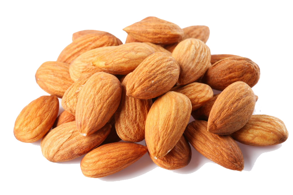 Almond vector badam. Png images free download