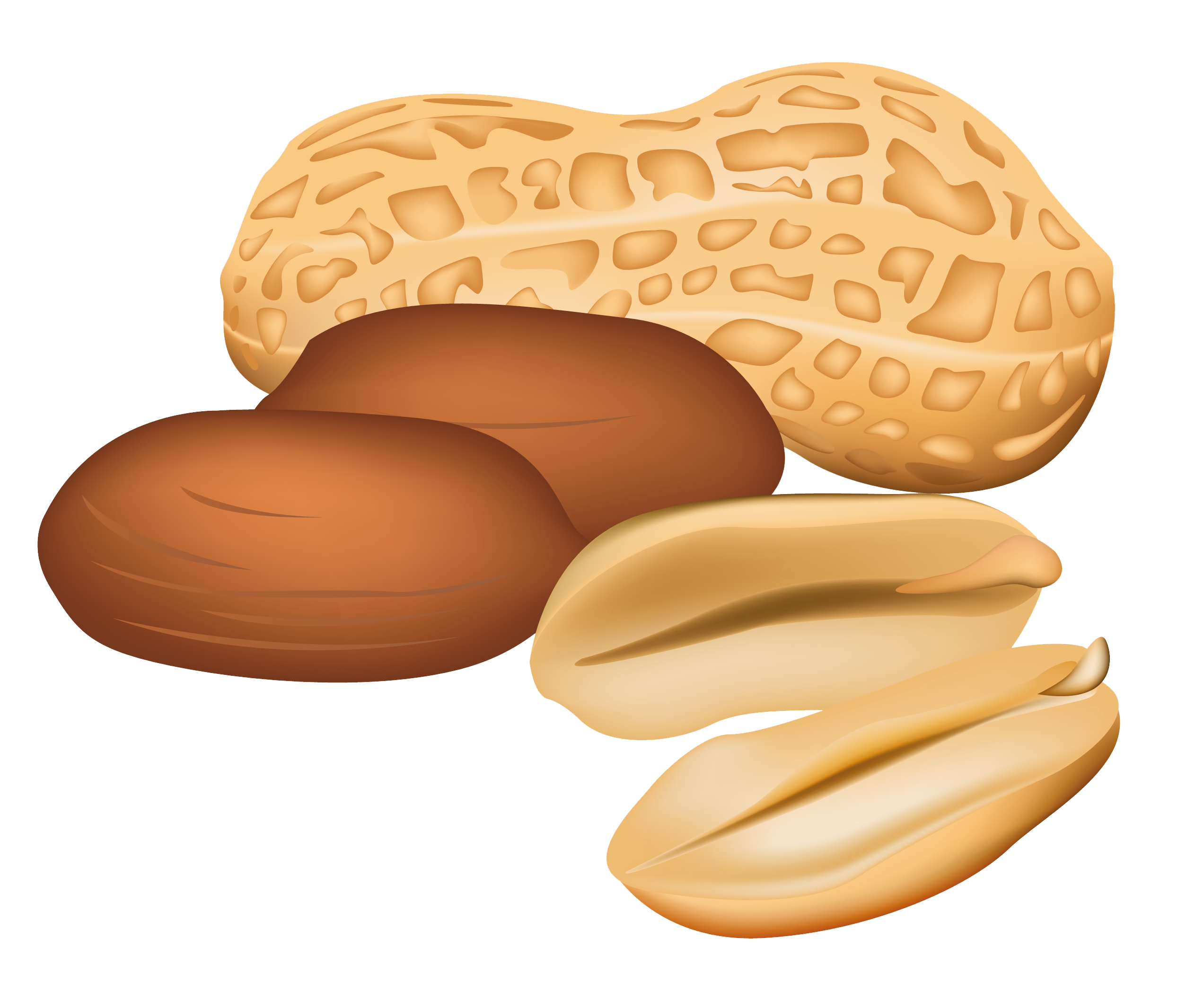 Transparent peanut. Free nuts cliparts download
