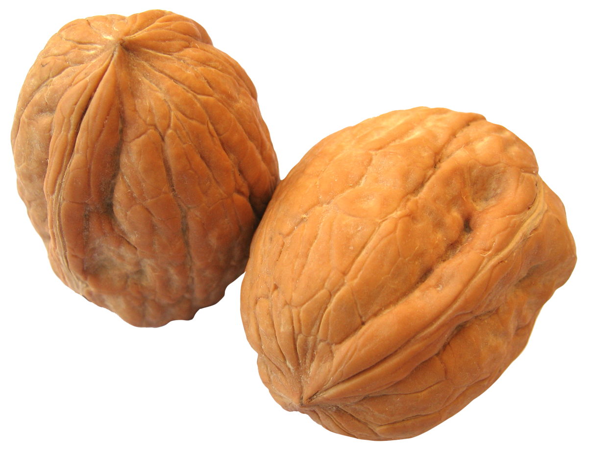 Nuts transparent walnut. Png images free download