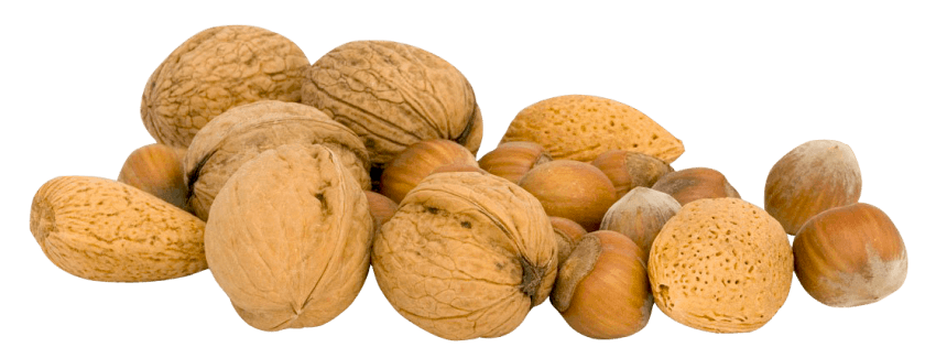 Nuts png. Free images toppng transparent