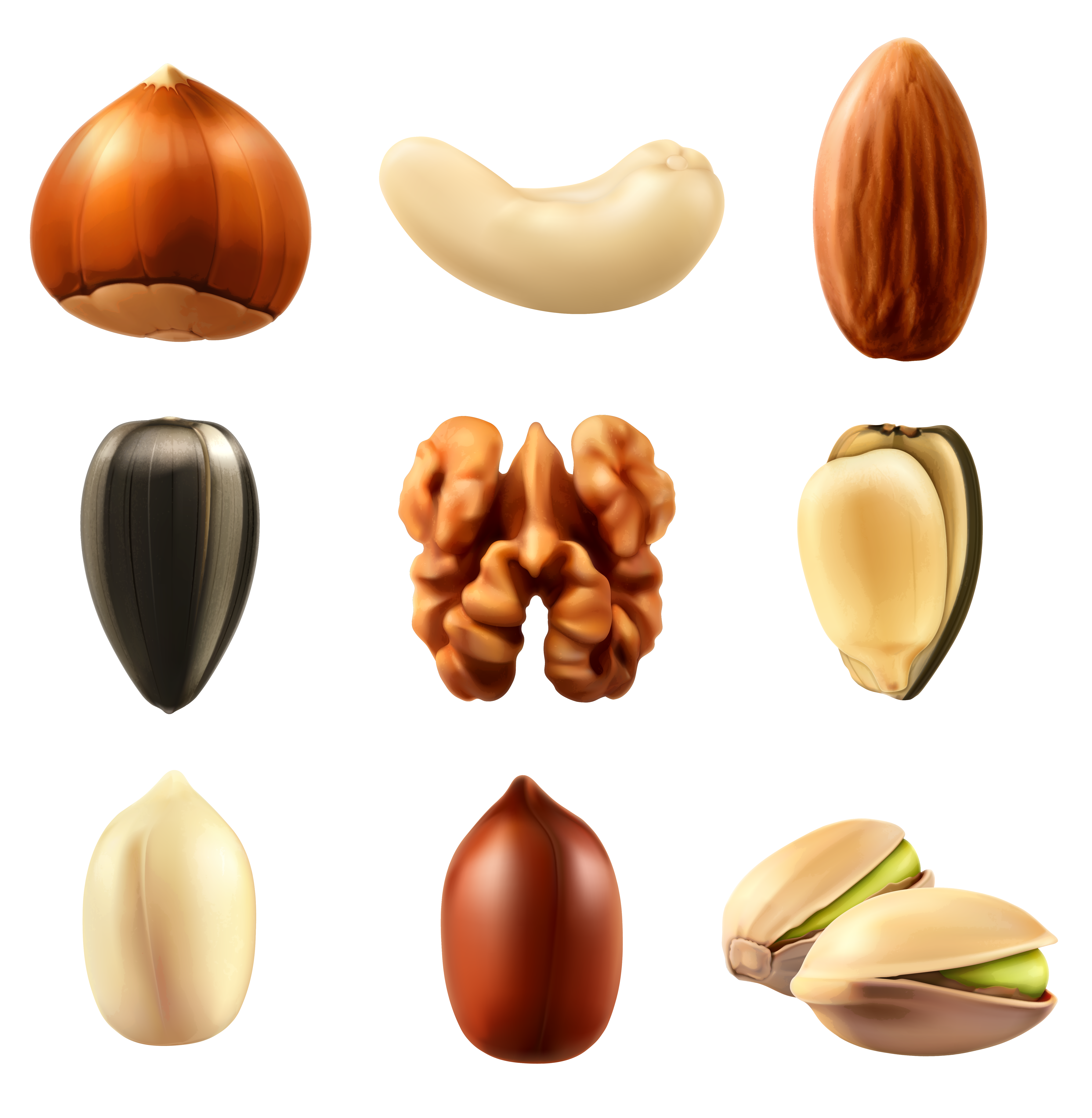 Nuts png. Collection clipar image gallery