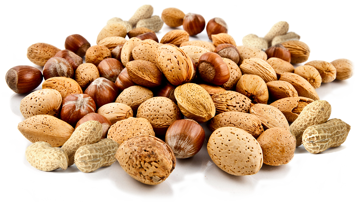 nuts vector seed