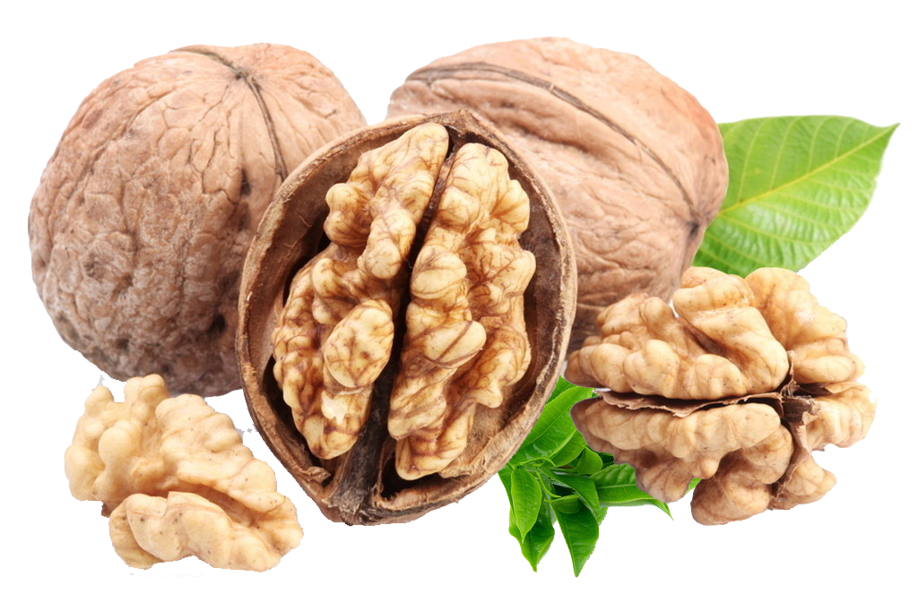 Nuts transparent fatty. English walnut omega acid