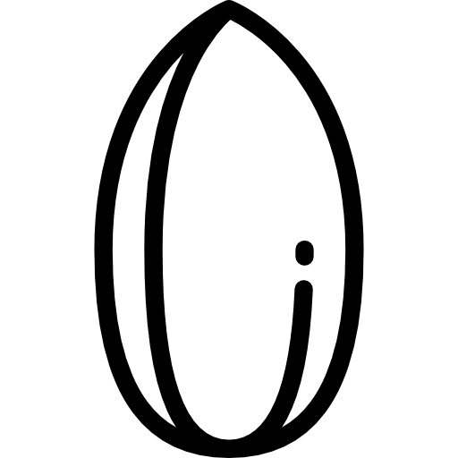 Nuts transparent outline. Almond icon