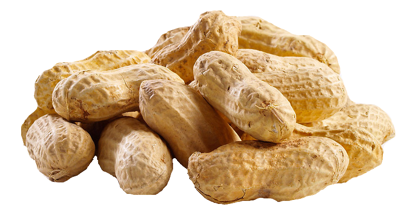 Nuts transparent peanut. Png images all hd