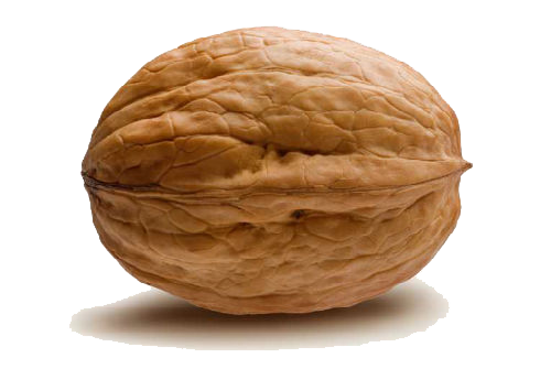 Nuts transparent walnut. In png web icons
