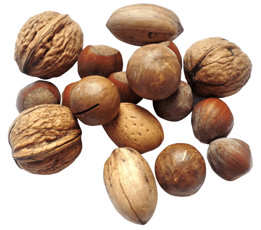 Nuts transparent walnut. Nut png free images