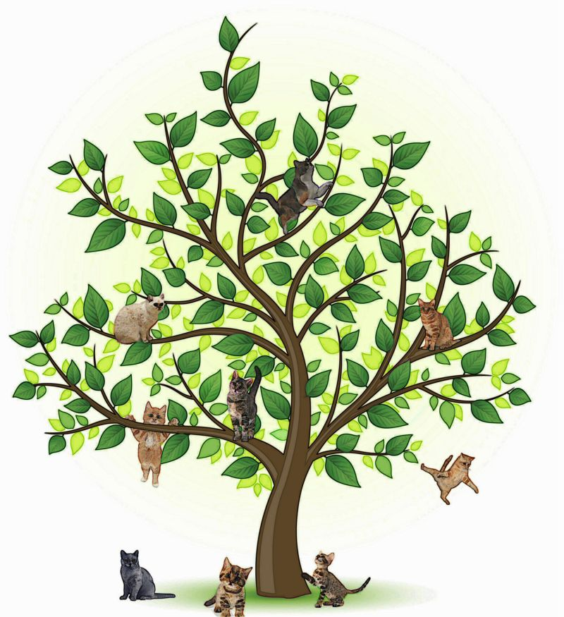 Oak clipart brazil nut tree. Albums cats nagel family