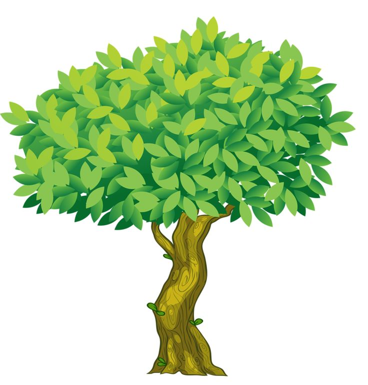 Oak clipart brazil nut tree. Best images on