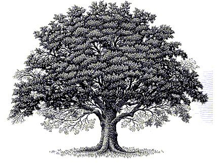Oak clipart detailed tree. Best images on