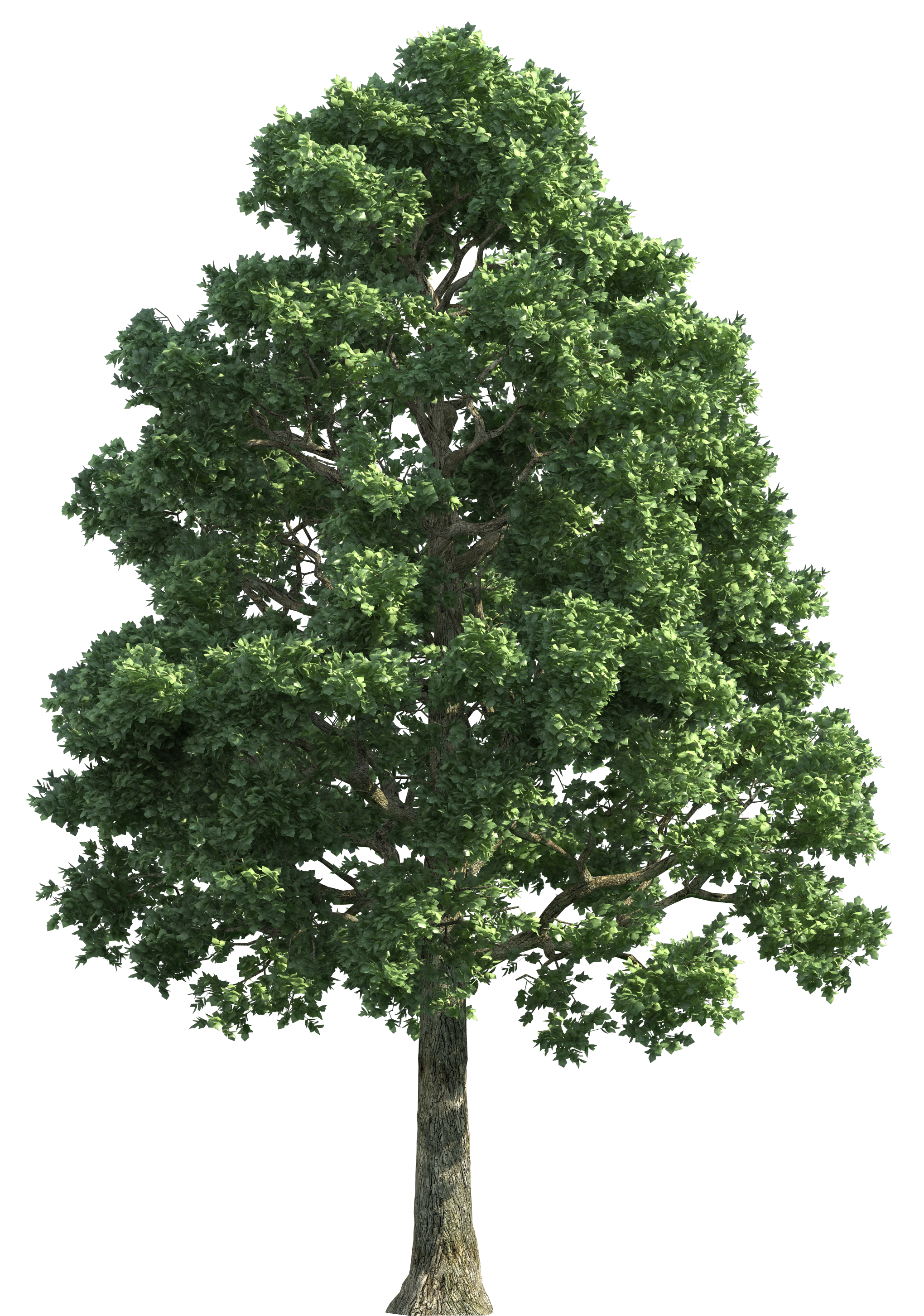 Background trees png. Green realistic tree clip