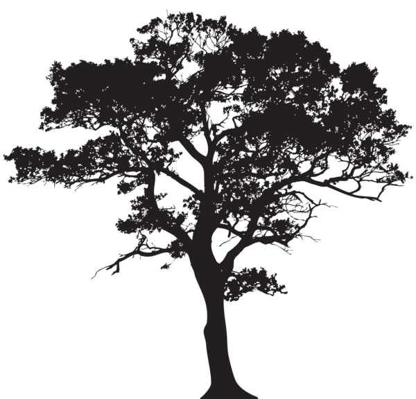 Trees png black and white. Silhouette tree clip art
