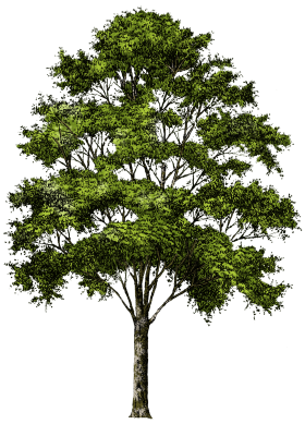 Oak clipart tree top. Pin by tlb on