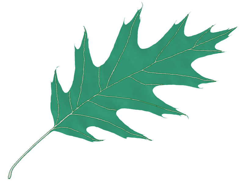 Oak leaf png. Icon free icons and