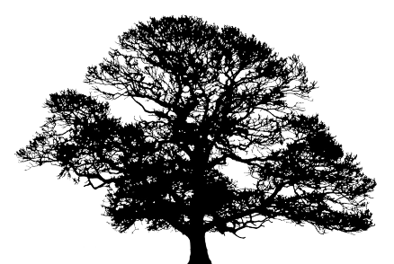 Oak tree silhouette png. Pngdot com free images