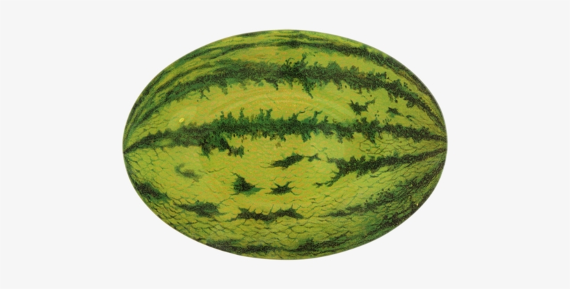 Oblong watermelon. Objects with shape x