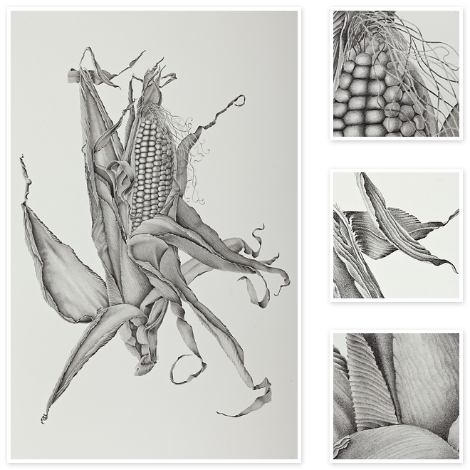Drawing marker nature. Zea mays sweet corn