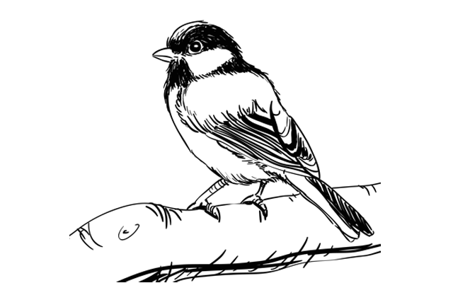 Observation drawing easy. Step by animal tutorials