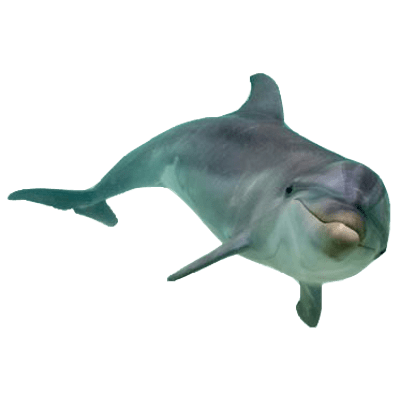 Sea animals png. Transparent images stickpng dolphin