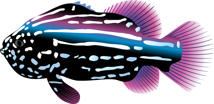 Ocean clipart fish. Transparent png mart