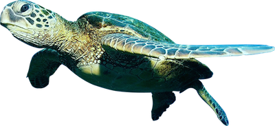 Ocean fish png. Download free file dlpng