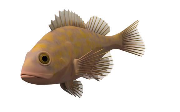 Ocean fish png. Free download