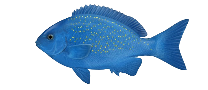 Ocean fish png. Photos mart