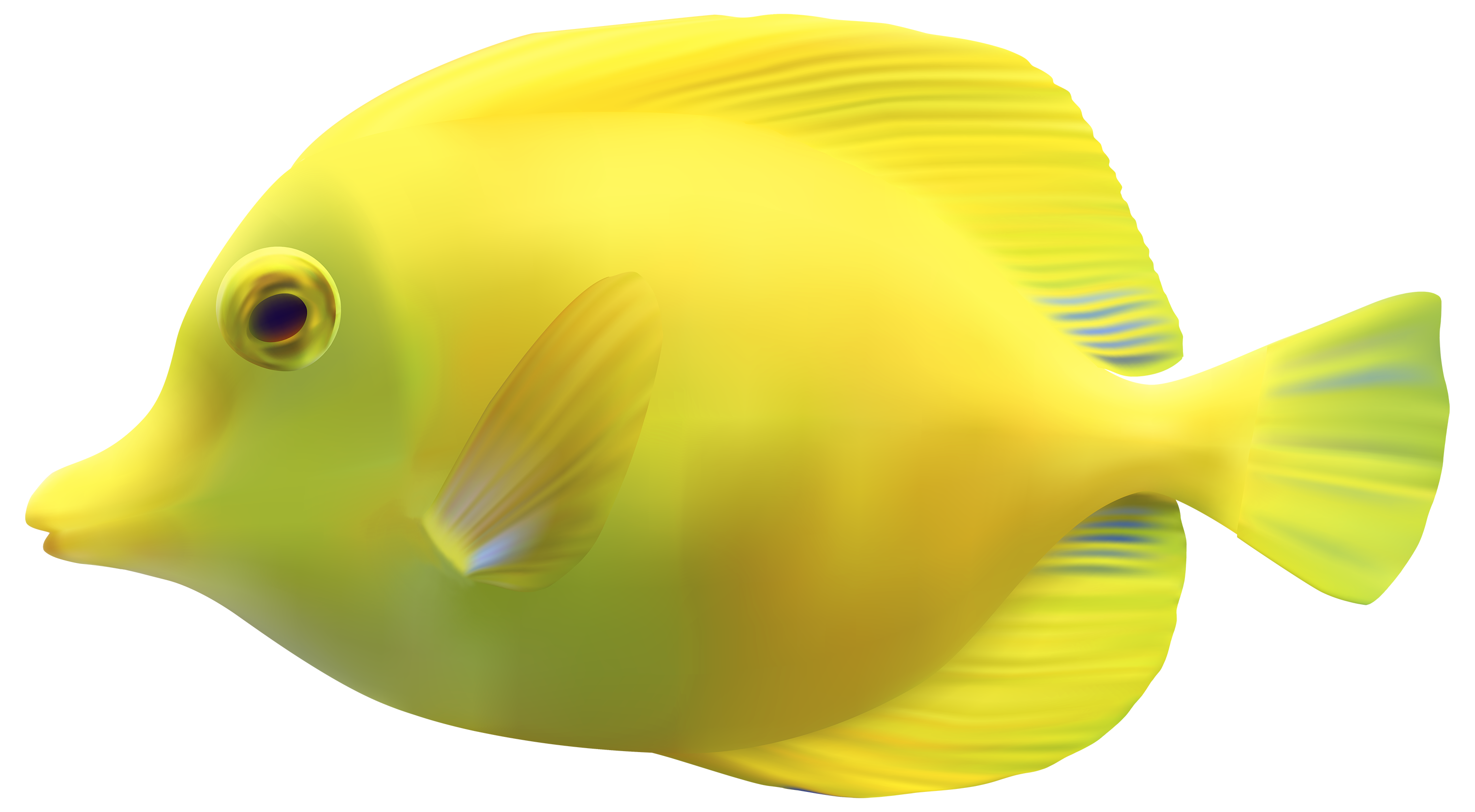 Ocean fish png. Transparent images pluspng image