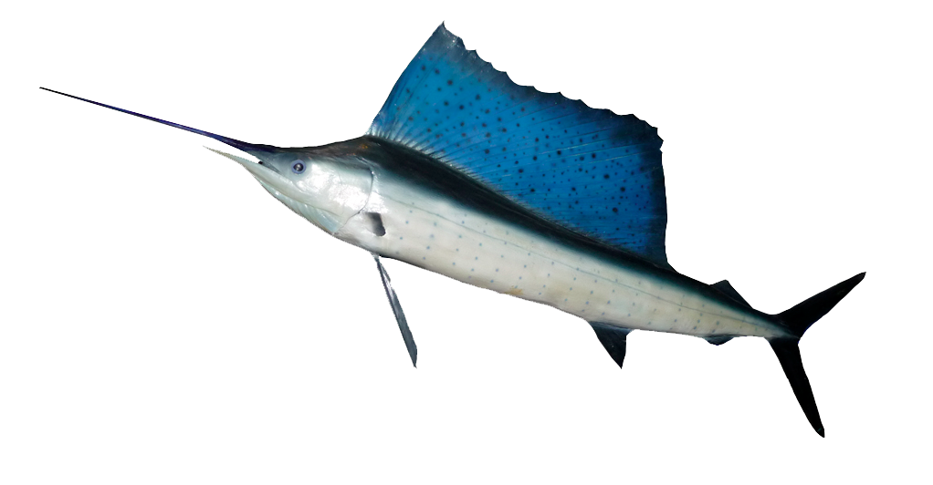 Ocean fish png. Hd transparent images pluspng