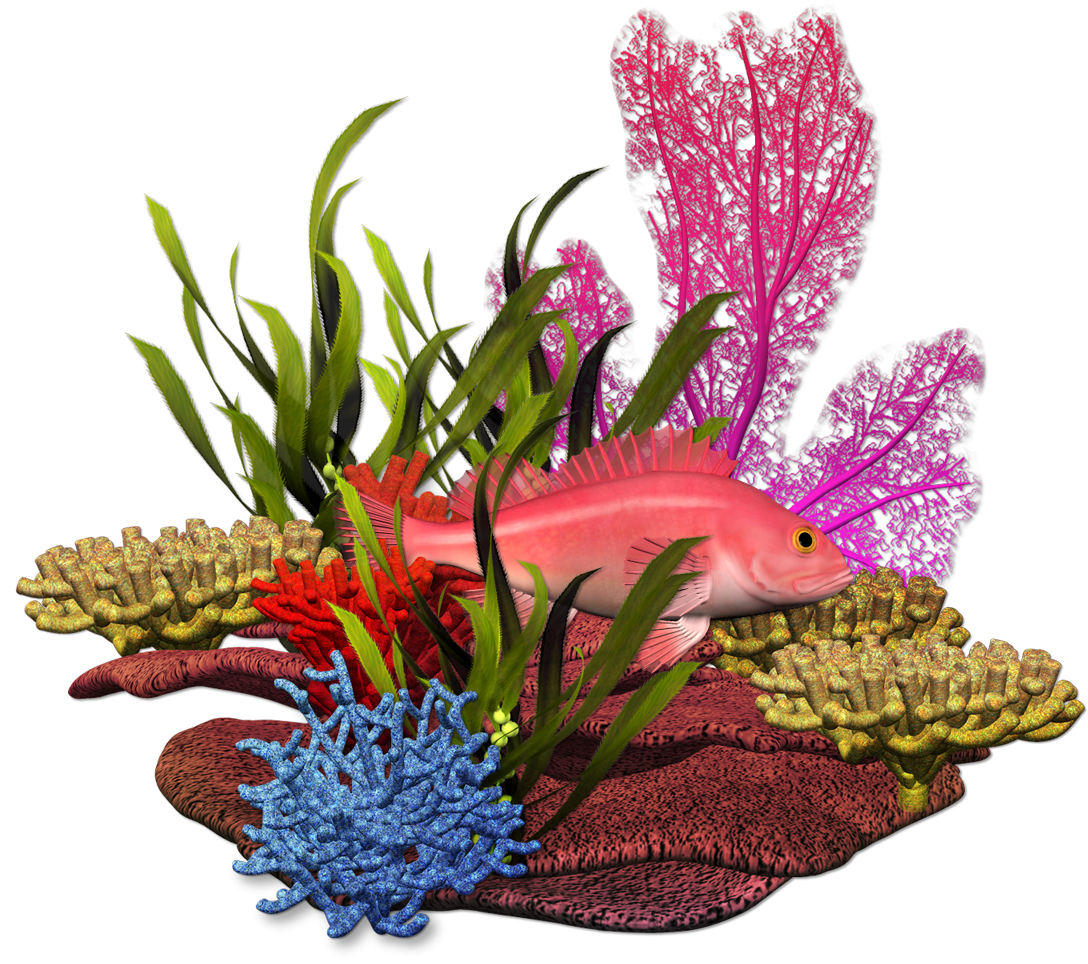 sea plant png