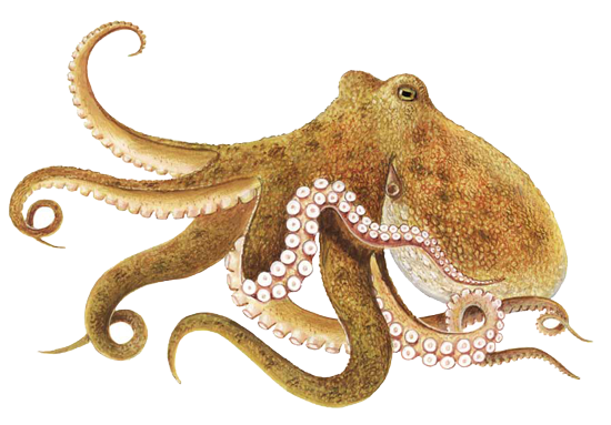 Vector tentacles octopus arm. Png transparent images all