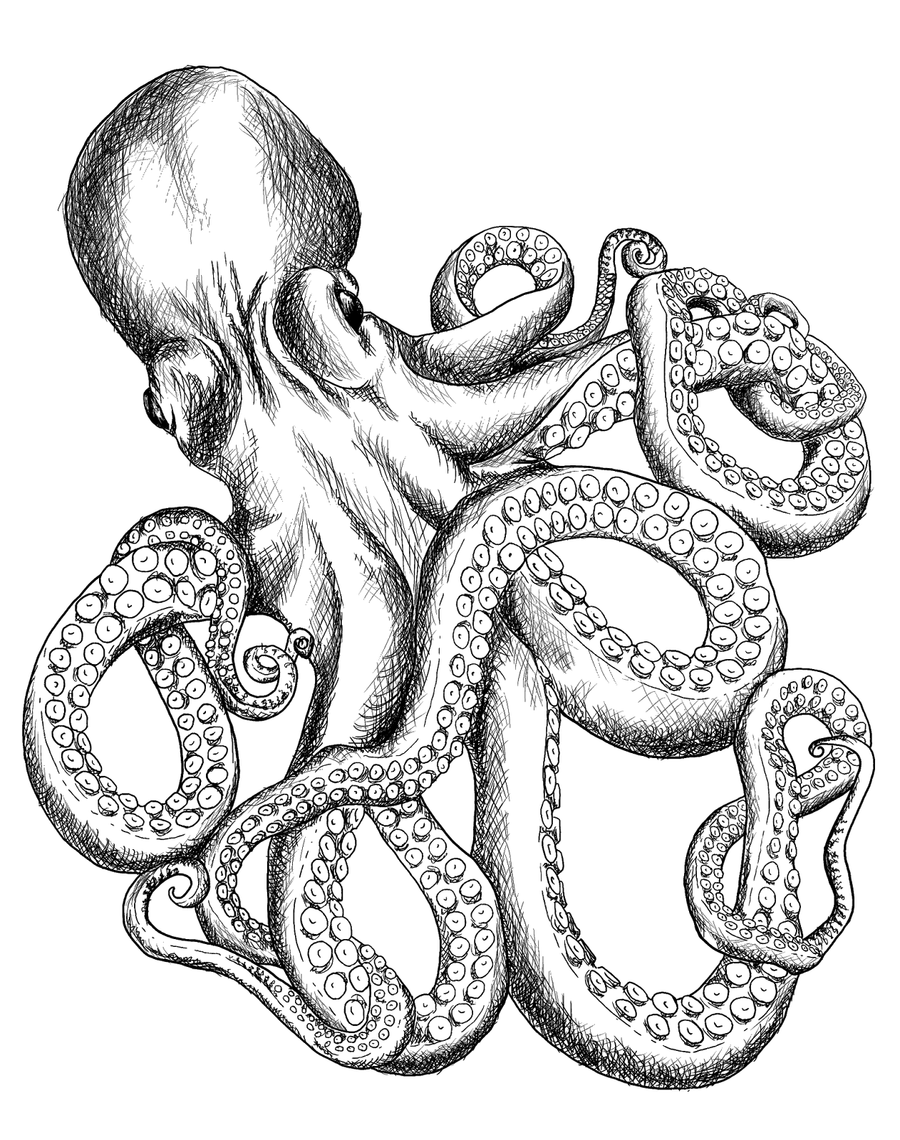 T shirt line art. Scholarships drawing octopus vector black and white